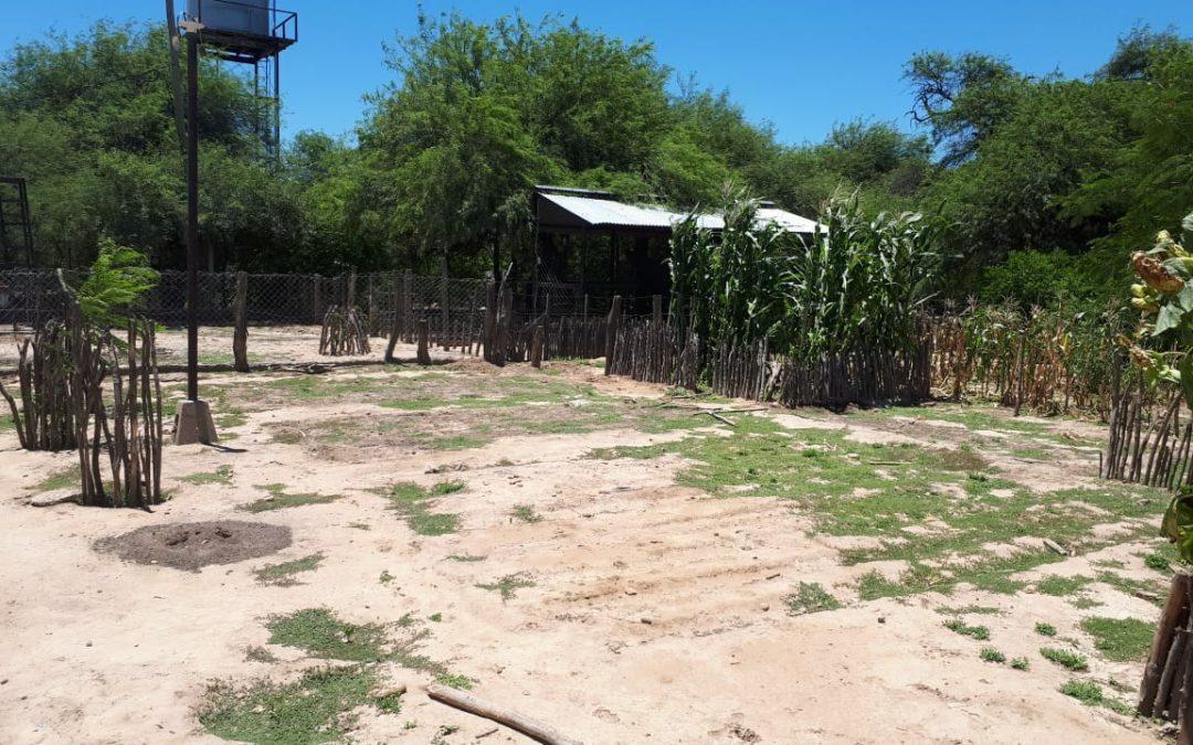 La escuela Nº3146 construyó su huerta