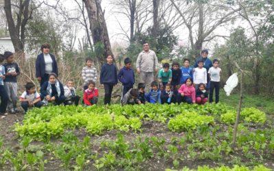 ¡Proyectos de huerta y Ferias de alimentos saludables!