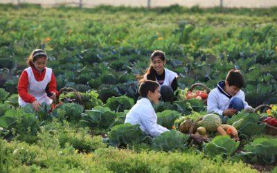 Huerta Niño se suma al Día Mundial de la Alimentación