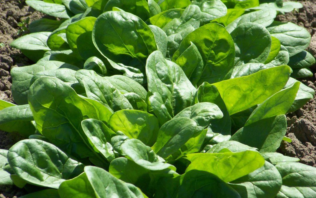 ¡Te contamos las mejores opciones para la siembra de otoño!