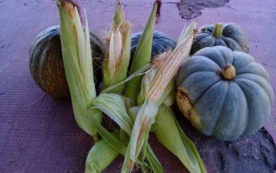 ¡Aprovechá las verduras de otoño y probá estas recetas!
