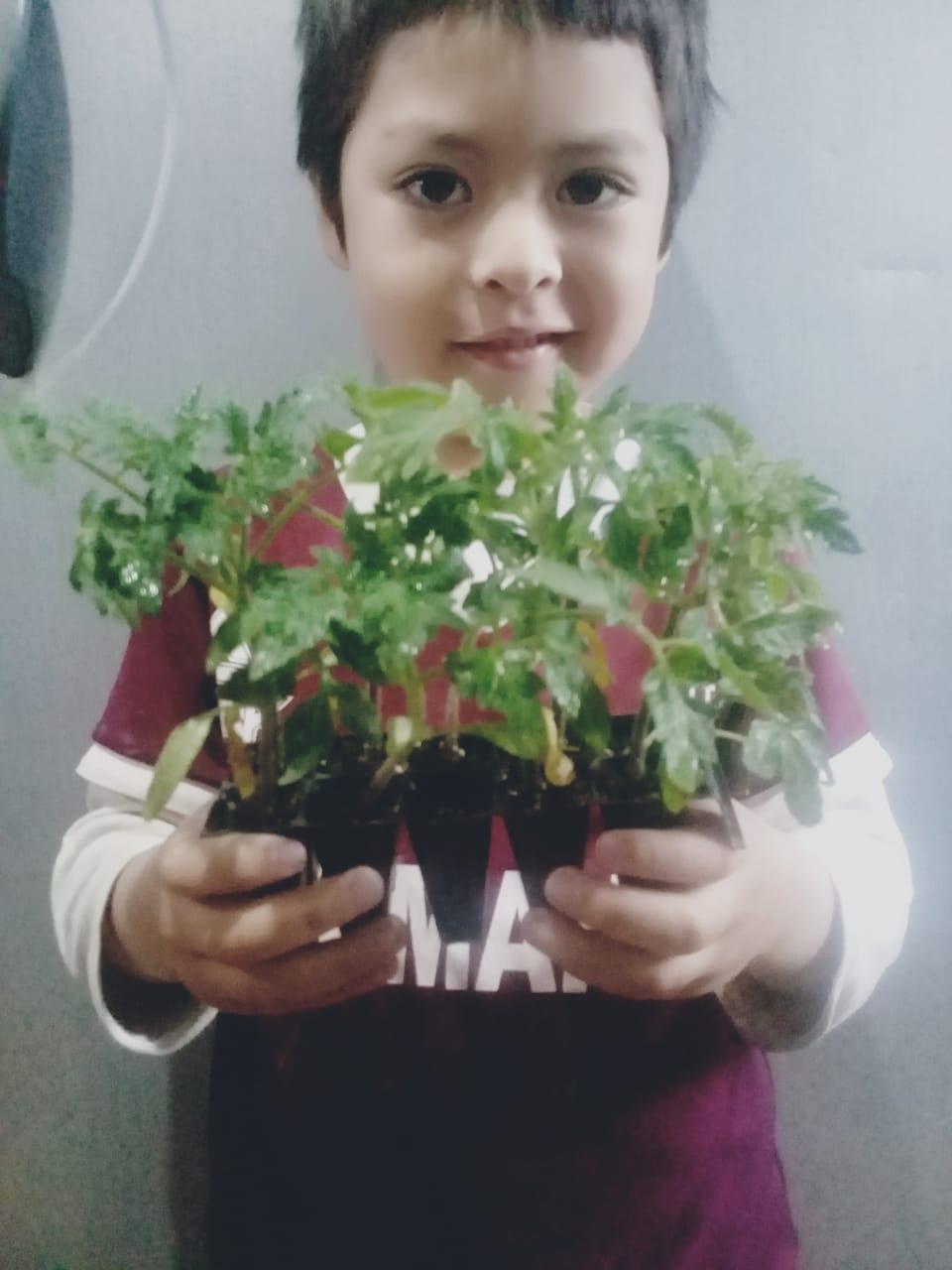 Niño con plantines