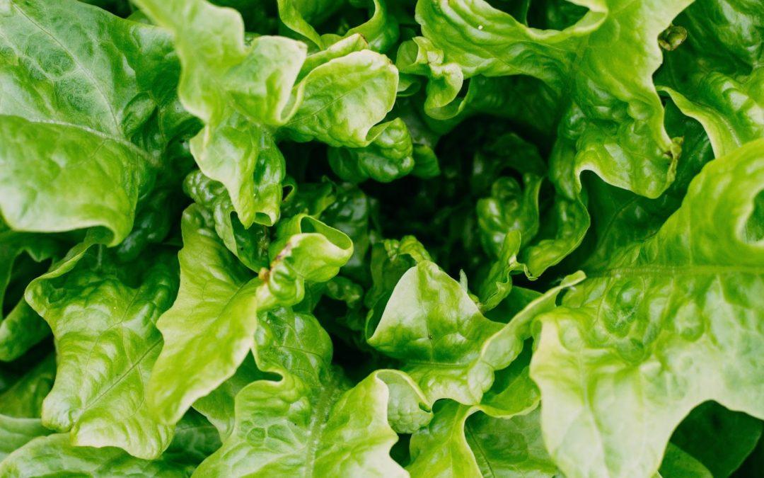 Los beneficios de las frutas y verduras de estación