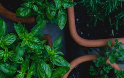 Huerta Tip: Asociación y rotación de cultivos